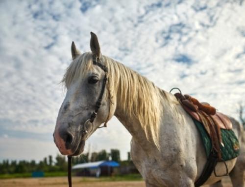 Acreage, A Cast Iron Tub and A Horse Named Jim